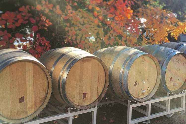 Fall barrels waiting to be filled after harvest
