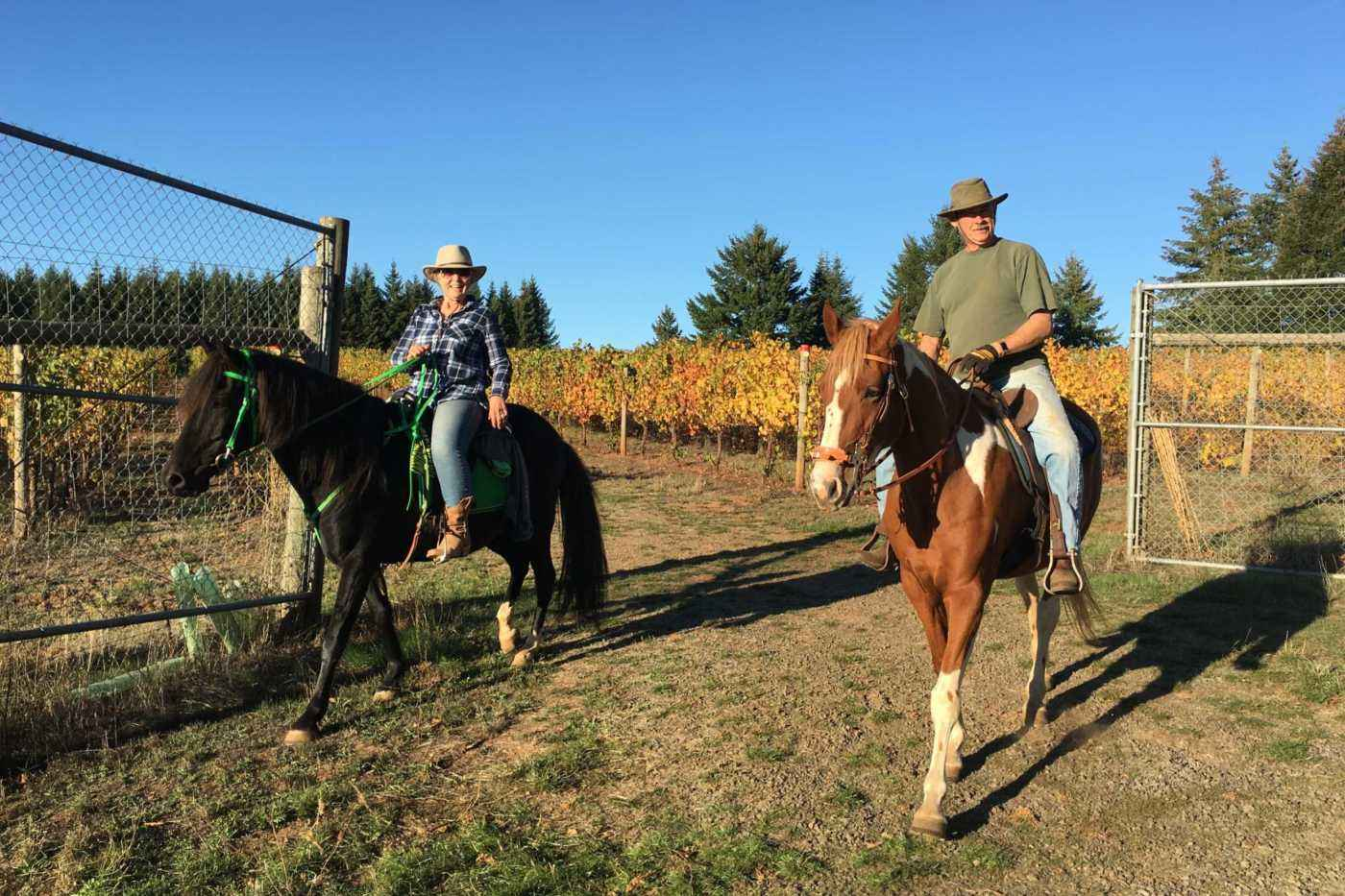 Guests make a visit to the vineyard on horseback