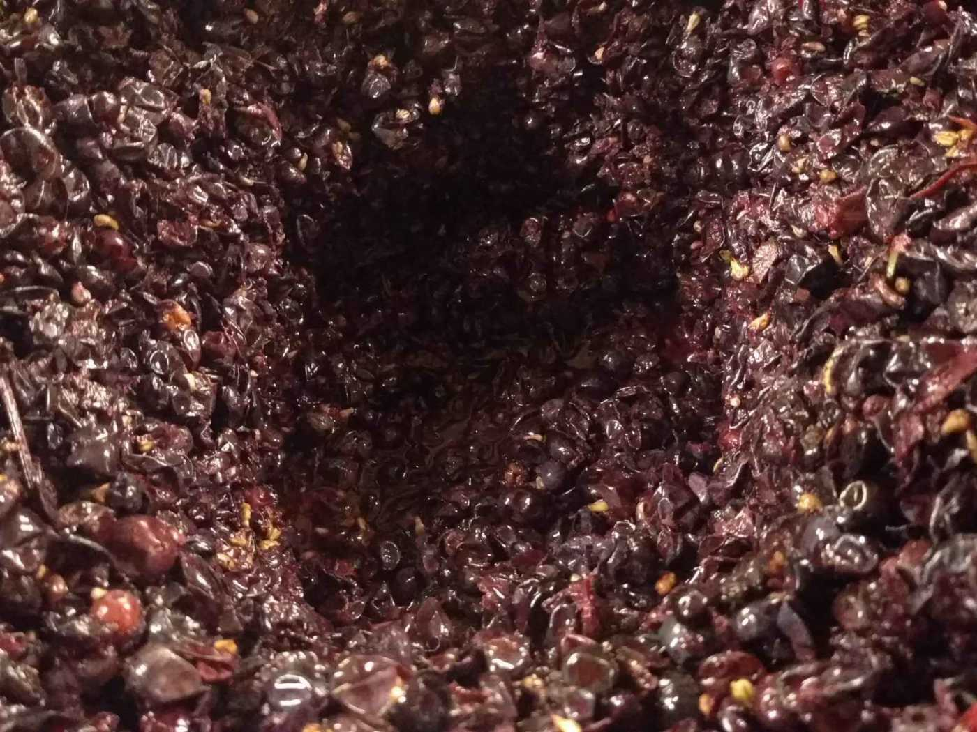 Grape funnel during fermentation punchdowns